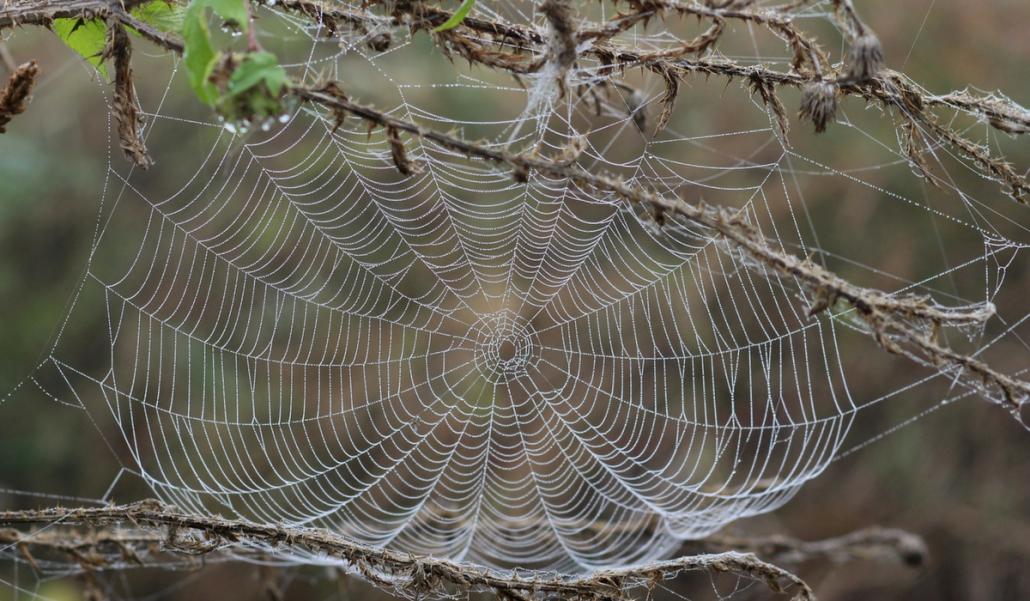 Wat Heeft Een Spinnenweb Met Bloggen Te Maken