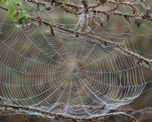 Blogbureau-Wat heeft een spinnenweb met bloggen te maken